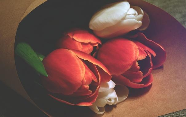 Фото обои цветы, тюльпаны, красные, белые