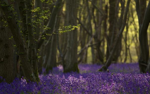 Фото обои лес, деревья, цветы, природа