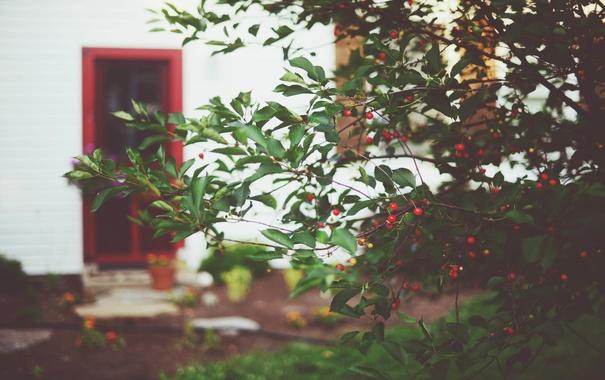 Фото обои ветки, ягоды, куст, дверь, красные