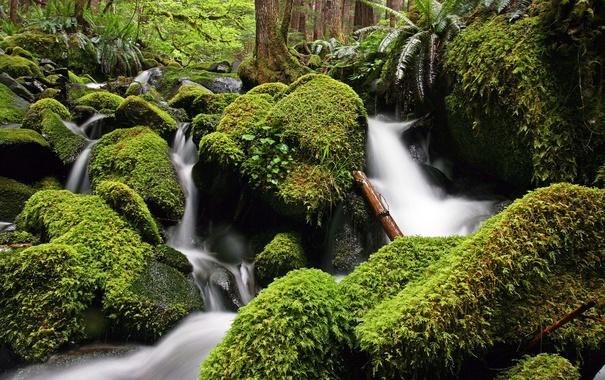 Фото обои зелень, вода, река, камни, мох, поток