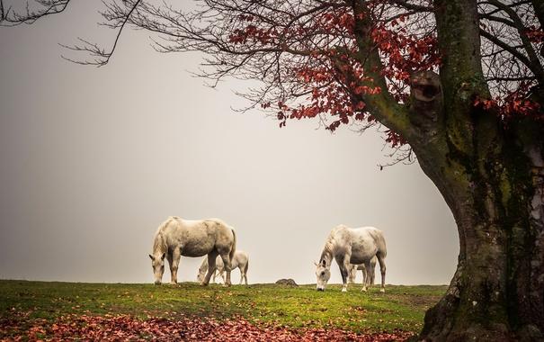 Фото обои туман, дерево, кони