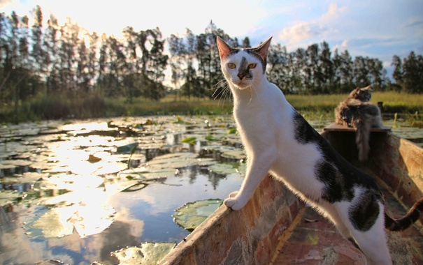 Фото обои кошка, кот, взгляд, лодка
