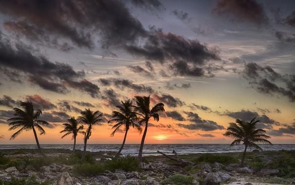 Фото обои море, небо, облака, пальмы, берег, вечер