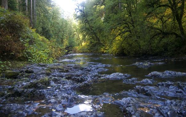 Фото обои лес, деревья, ручей, камни, США, Silver Falls State Park