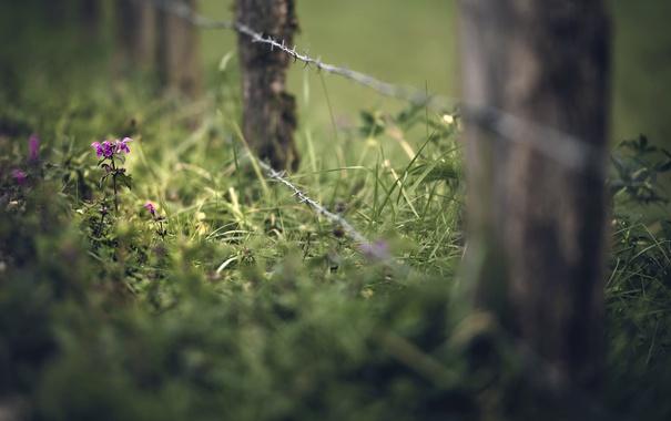 Фото обои лето, трава, забор