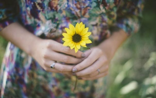 Фото обои цветок, желтые, руки, лепестки, кольцо