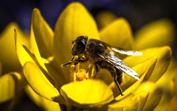 Фото обои цветок, лепестки, насекомое