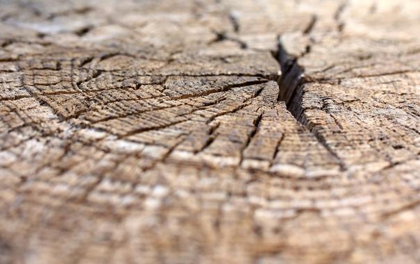Фото обои фон, дерево, текстура