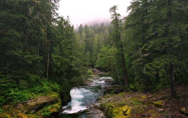 Фото обои лес, деревья, туман, ручей, течение, Вашингтон, США