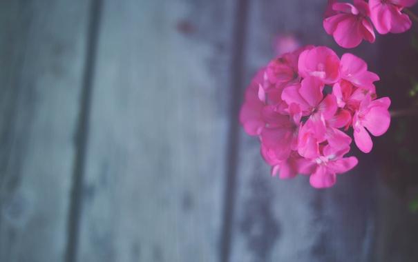Фото обои цветок, лепестки, розовые