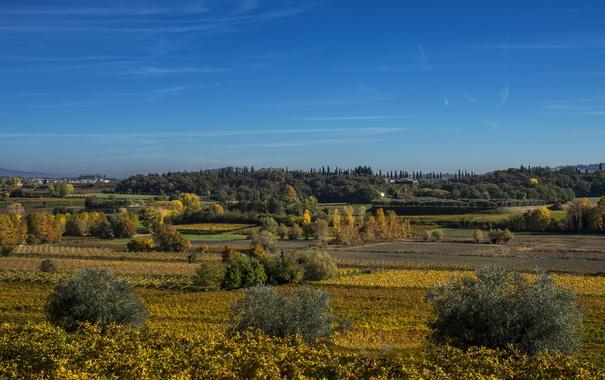 Фото обои поля, плантации, Италия, Lazise, Veneto, деревья, лето