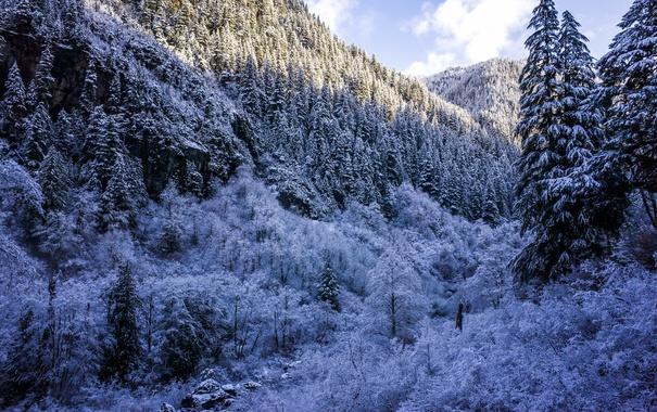 Фото обои зима, лес, снег, деревья, горы, ущелье