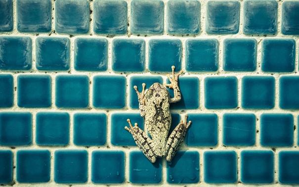 Фото обои фон, цвет, лягушка