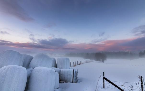Фото обои зима, снег, туман