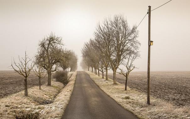 Фото обои дорога, поле, природа