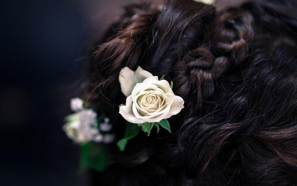Фото обои цветы, розы, брюнетка, прическа, коса