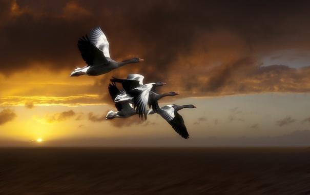 Фото обои небо, птицы, полёт