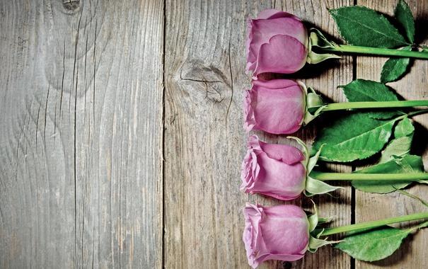 Фото обои розы, pink, flowers, roses