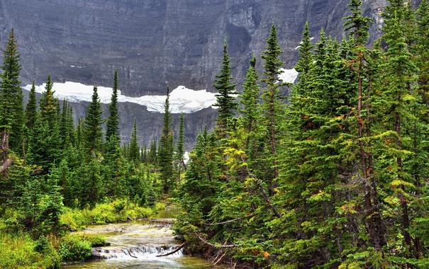 Фото обои лес, снег, деревья, скалы, течение, речка