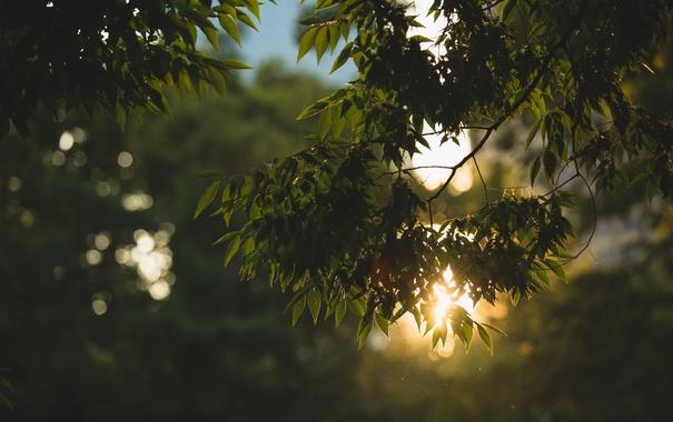 Фото обои листья, ветки, дерево, зеленые