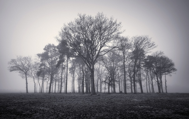 Фото обои деревья, природа, туман