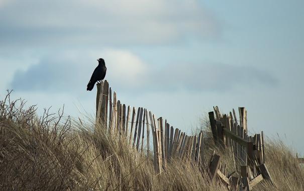 Фото обои птица, забор, небо