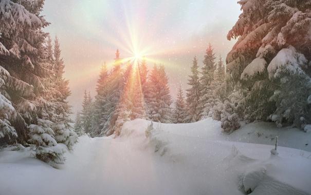 Фото обои зима, лес, солнце, снег, елка, nature, winter