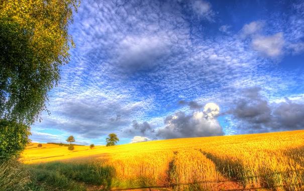 Фото обои поле, облака, деревья, природа, холмы, урожай