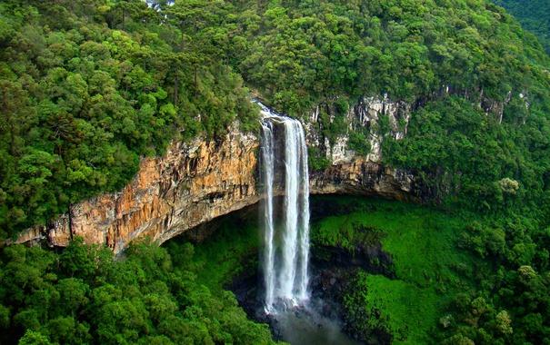 Фото обои лес, деревья, скала, обрыв, поток, Бразилия, штат Риу-Гранди-ду-Сул
