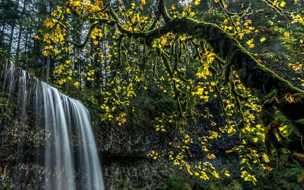 Фото обои лес, листья, деревья, ветки, водопад, мох, США