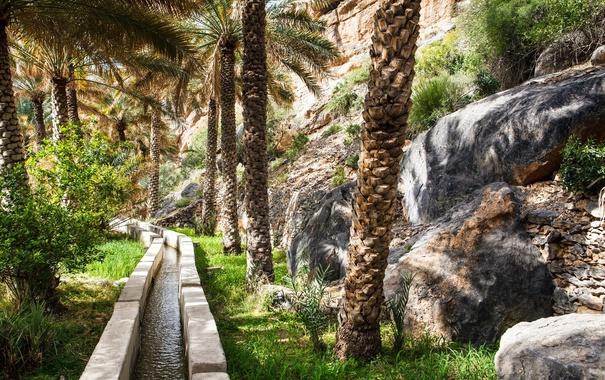 Фото обои trees, trail, plants, oman oasis