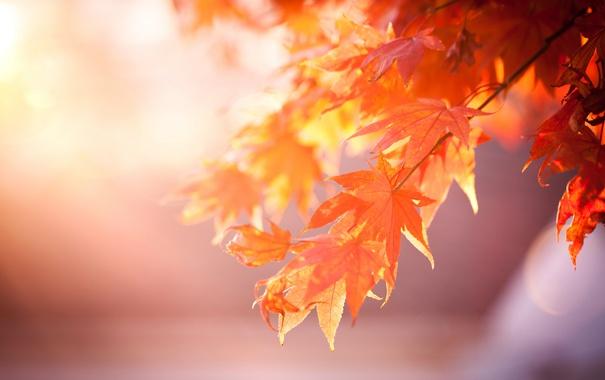 Фото обои листья, дерево, оранжевые