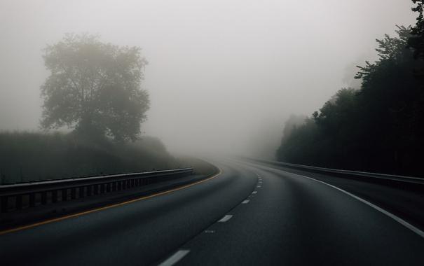 Фото обои дорога, деревья, туман