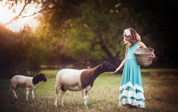 Фото обои фон, овцы, девочка