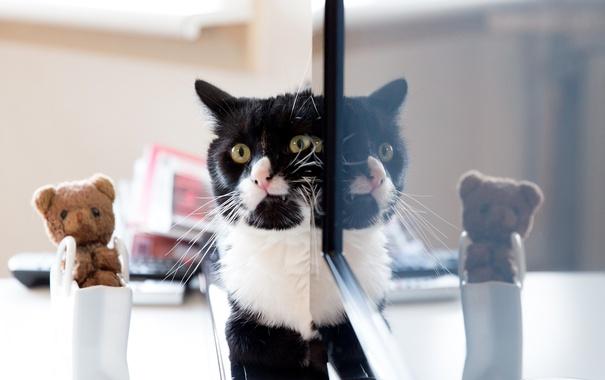 Фото обои кошка, кот, усы, взгляд, отражение