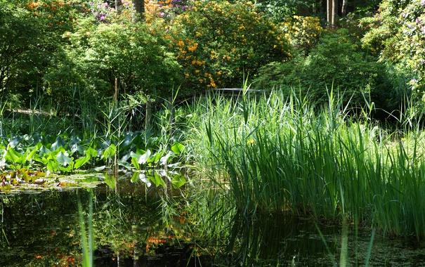 Фото обои пруд, трава, зелень, Park Seleger Moor, кусты, деревья, камыши