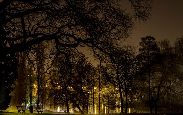 Фото обои деревья, ночь, ветки, огни, пруд, парк, газон