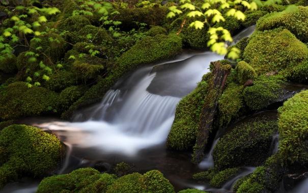 Фото обои зелень, вода, камни, мох, поток