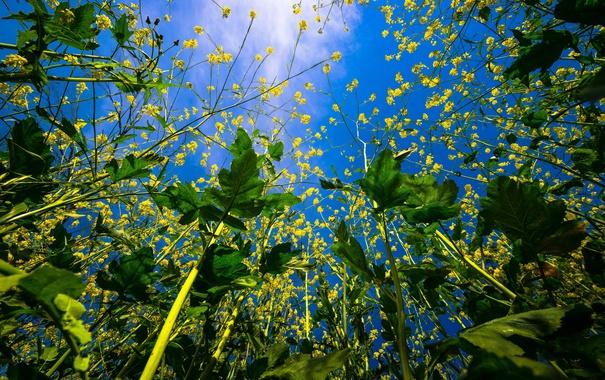 Фото обои небо, листья, природа, цветочки, вид снизу, веточки