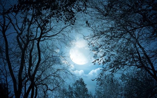 Фото обои деревья, луна, ночь, лес, облака, небо, ветки