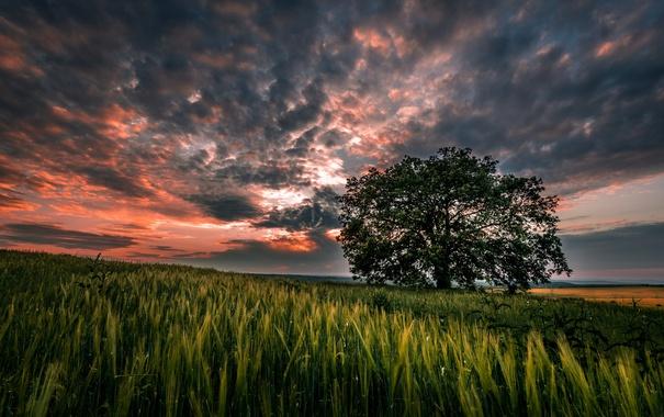 Фото обои небо, трава, облака, пейзаж, закат, природа, дерево