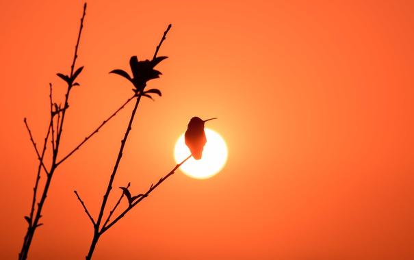 Фото обои свет, птица, ветка