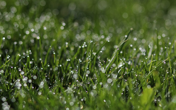Фото обои трава, капли, зеленый