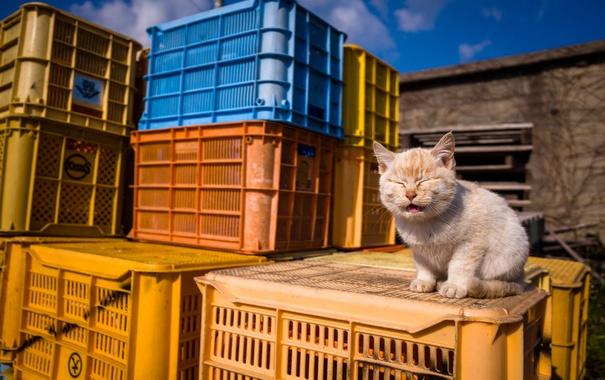 Фото обои кошка, фон, ящики