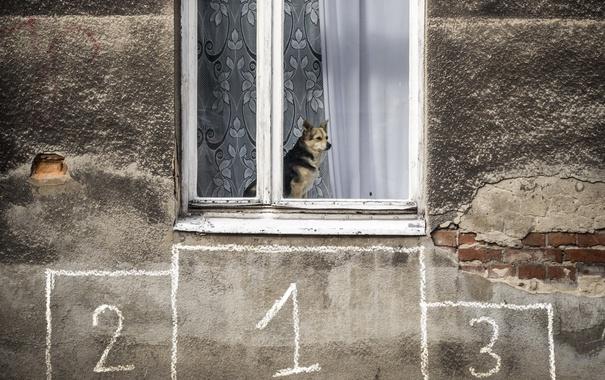 Фото обои дом, собака, окно