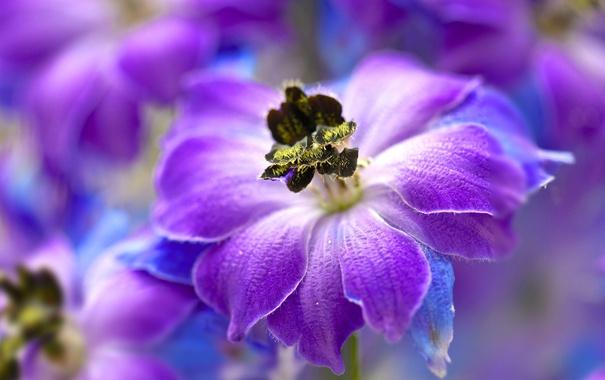 Фото обои цветок, природа, краски, лепестки