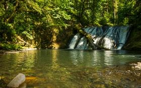 Обои лес, водопад, США, Silver Falls State Park