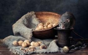 Обои ступка, пестик, орехи, крыса
