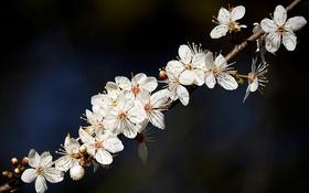 Обои природа, веточка, цветочки, цветение