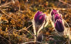 Обои цветы, природа, весна